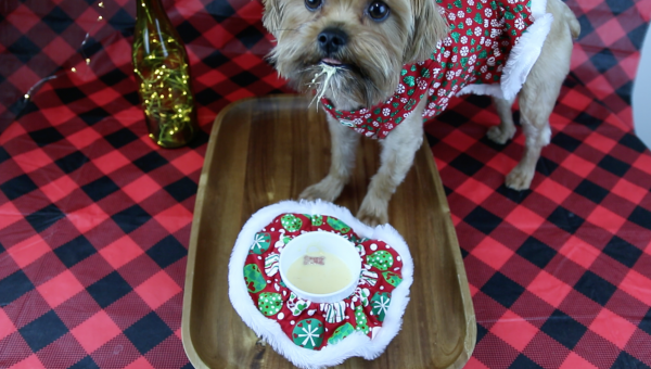 How to Make 5-Minute Holiday Eggnog for Your Dog [Video]