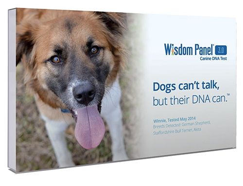 wisdom-panel-dna-test-kit