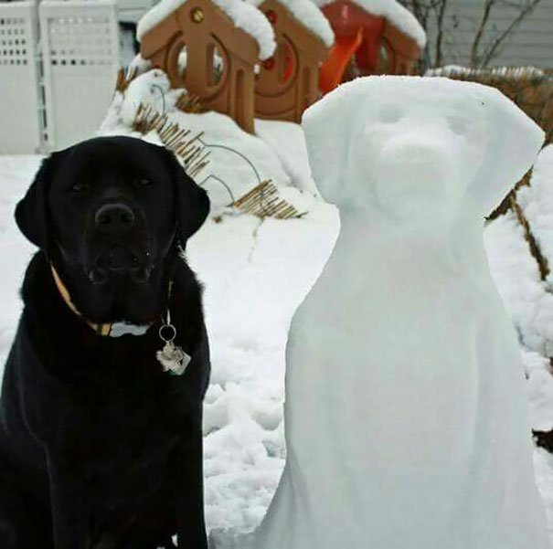 black-and-white-labs