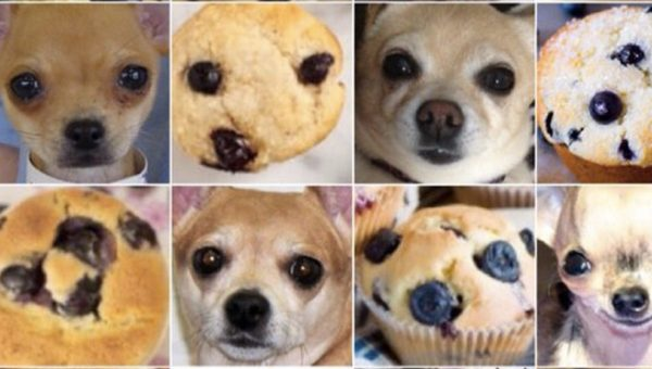 Chihuahua or Muffin? Dalmatian or Ice Cream? Vote for Your Favorite Dogs that Look Like Food