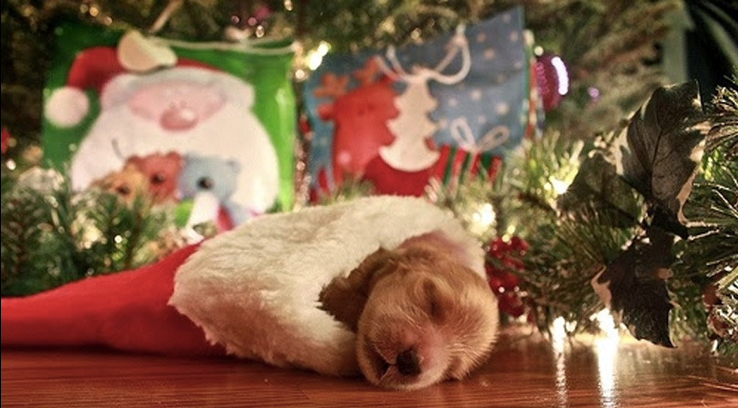 15 Gifts for the Dog Owner Who Has Everything | The Dog People by ...