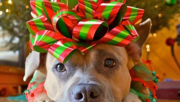 The Right Way to Give a Puppy as a Gift