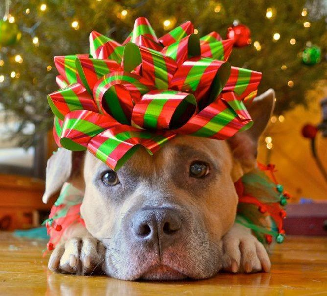 Giving A Puppy As A Gift: The Right Way To Do Christmas