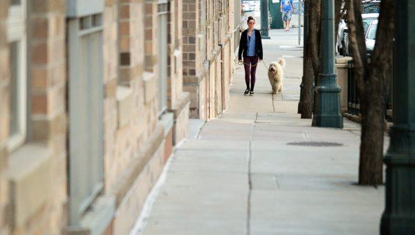 Denver's Top Dog Names of 2018