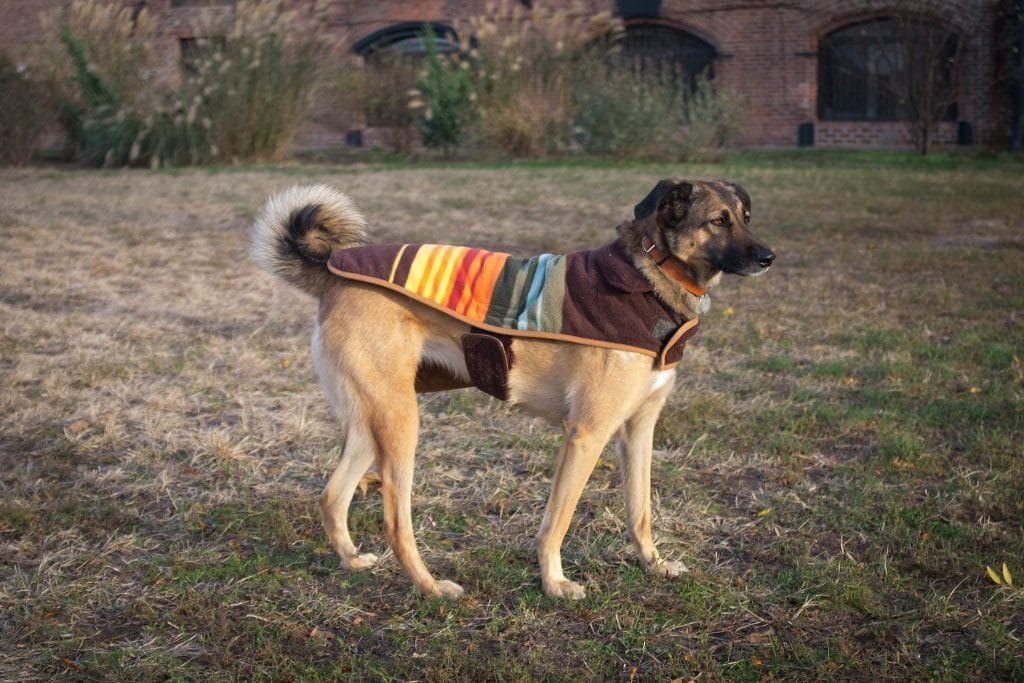 A dog in a colorful winter coat