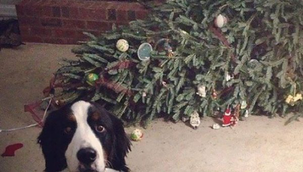 8 Tips to Dog-Proof your Christmas Tree (and Tree-Proof your Dog)