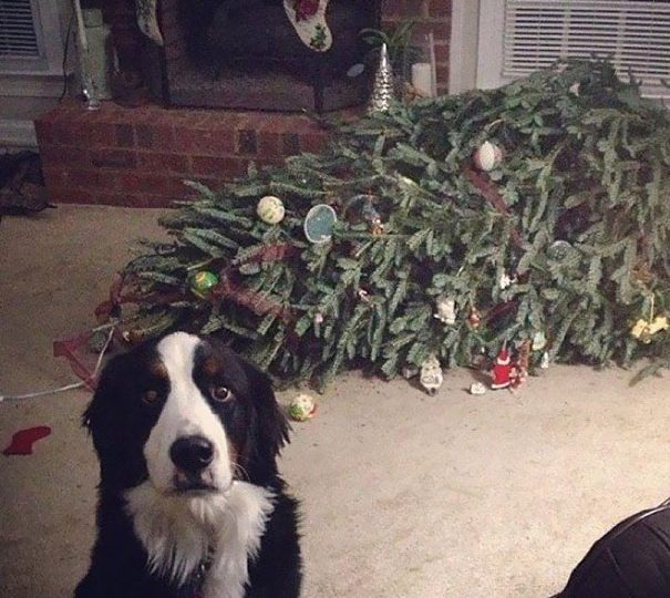 8 tips to dog proof your christmas tree and tree proof your dog the dog people by rovercom