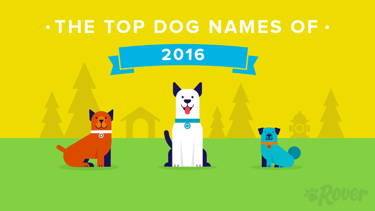top 100 male and female dog names by breed gender city and more