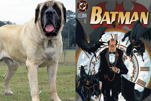 english-mastiff-alfred-pennyworth-batman-dog-names