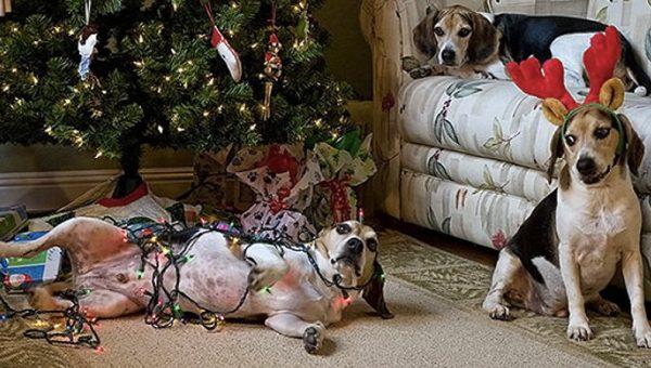 10 Awww-Inspiring Dog Christmas Ornaments