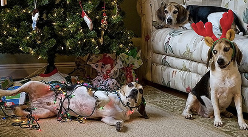 15 Awww-Inspiring Dog Christmas Ornaments