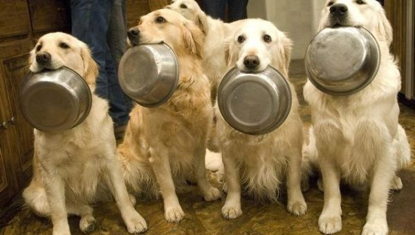 What to Feed Your Dog When You're Out of Dog Food