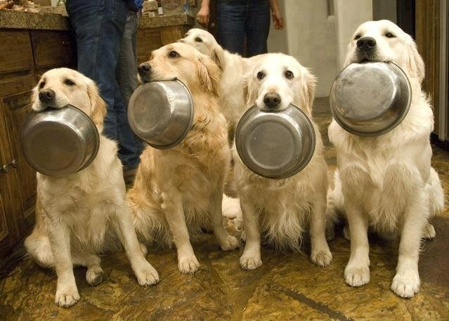 What To Feed Your Dog When Youre Out Of Dog Food The Dog People