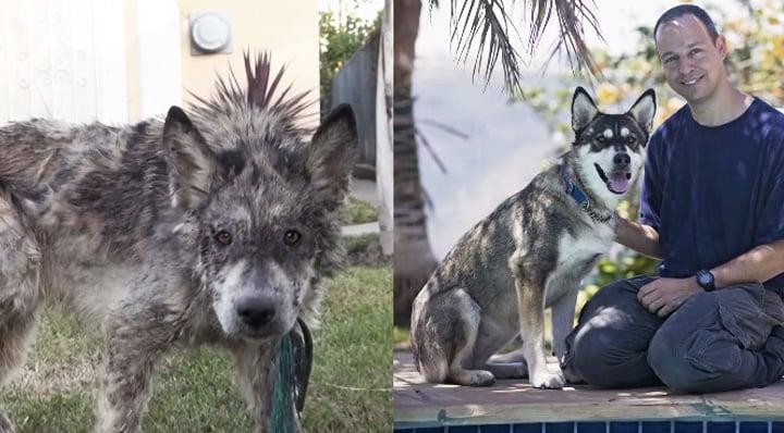 heartwarming-rescue-transformation