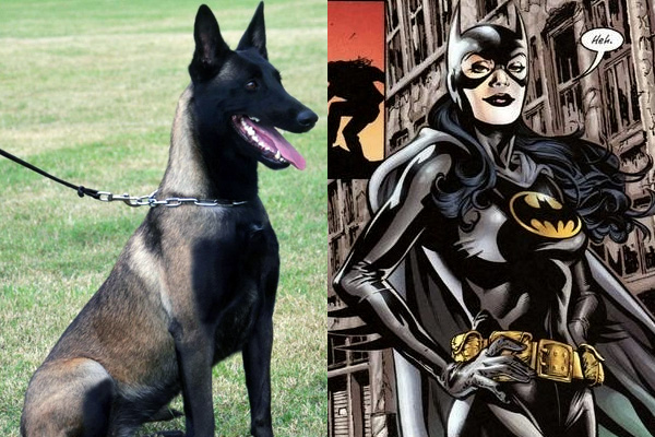 huntress-batgirl-batman-dog-names