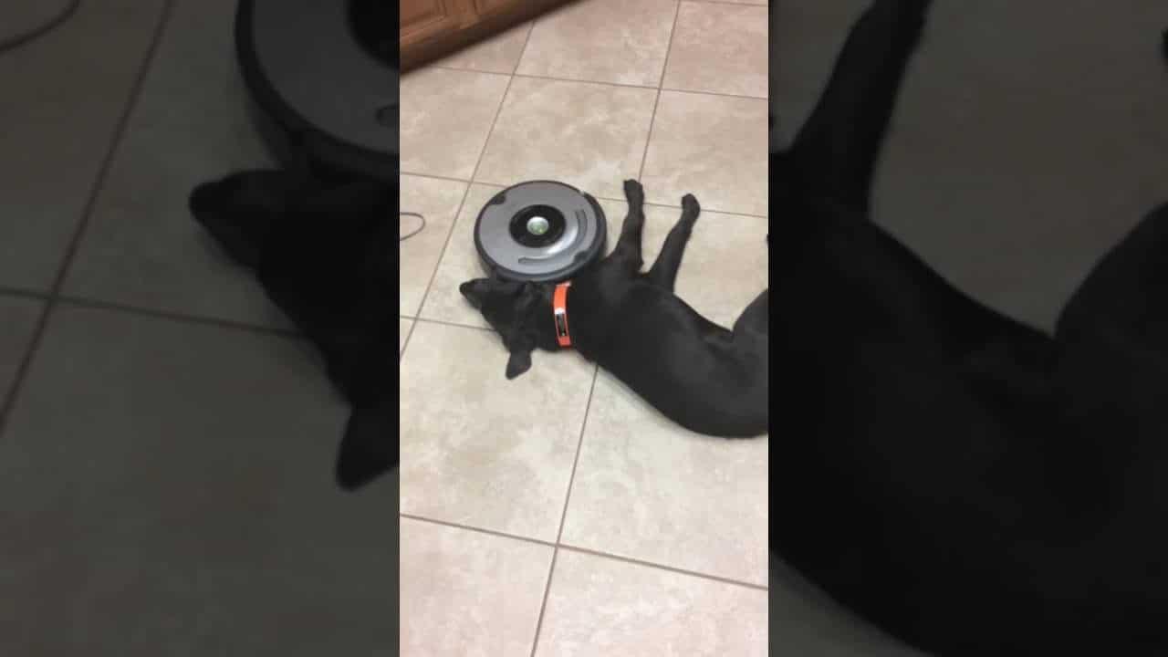 Lazy Dog Vs Roomba Who Will Win Video The Dog