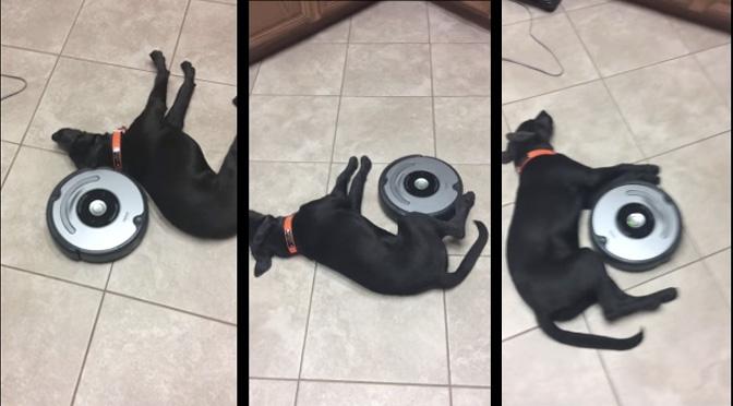 lazy-dog-vs-roomba-videoo