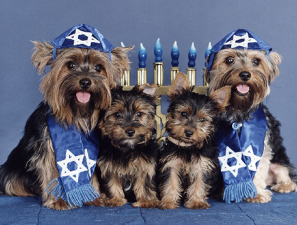 8 Days of Dog Gifts Just in Time for Hanukkah