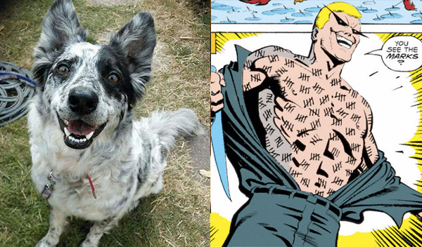 mr-zsasz-aussie-blue-heeler-batman-dog-names