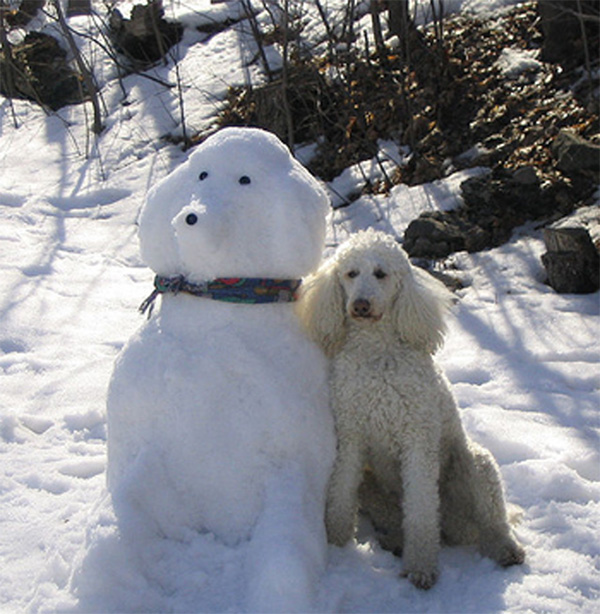 poodle dog snowman