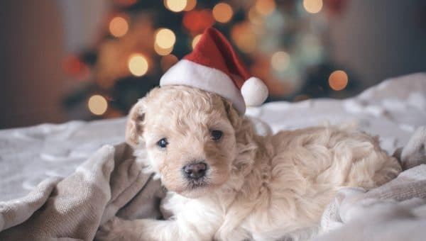 17 Christmas Movies You Should Watch with Your Dog