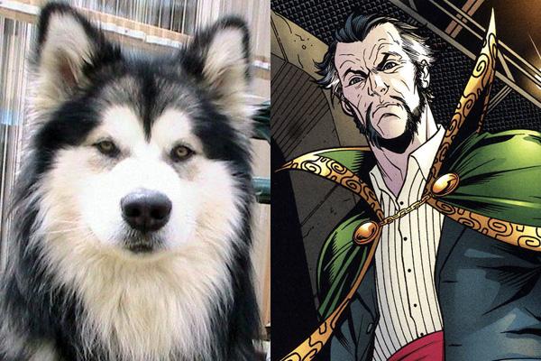 ras-al-ghul-malamute-batmand-dog-names