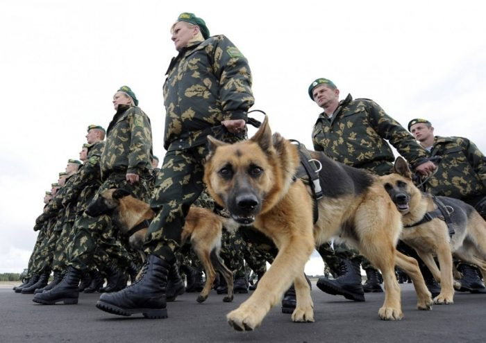 Popular German Shepherds Army Adorable Dog - russian-military-dogs-e1499371483530  Gallery_776959  .jpg