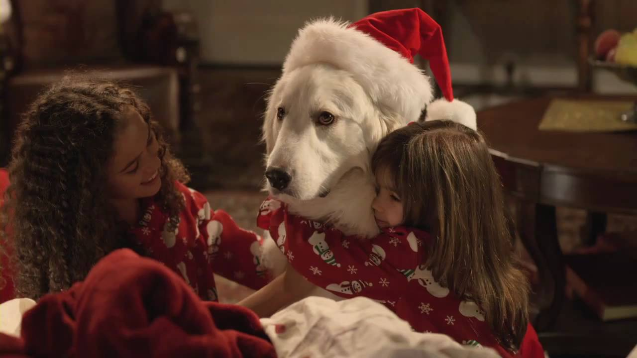 Santa Paws Dog Rescue