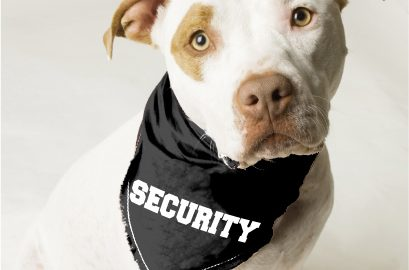 how to get a guard dog for protection