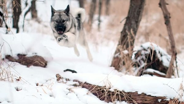 13 Extremely Satisfying Videos of Cold Weather Dogs Frolicking in the Snow