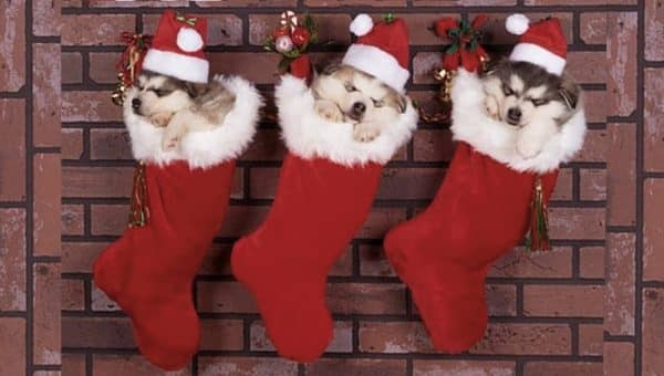 Just Try Not to Feel Christmassy After Seeing These Adorable Puppies