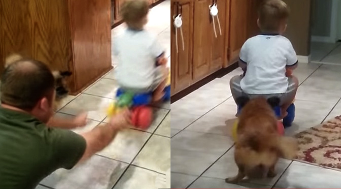 toddler-on-bike-gets-ride-from-dog