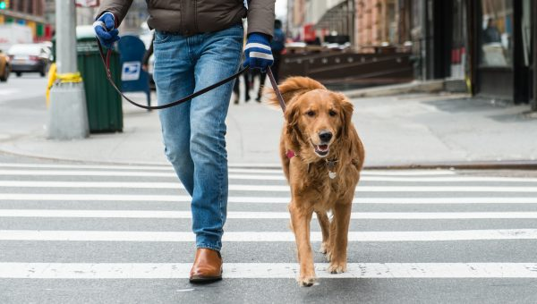 NYC's Best Neighborhoods for Dogs and Their Humans, by the Numbers