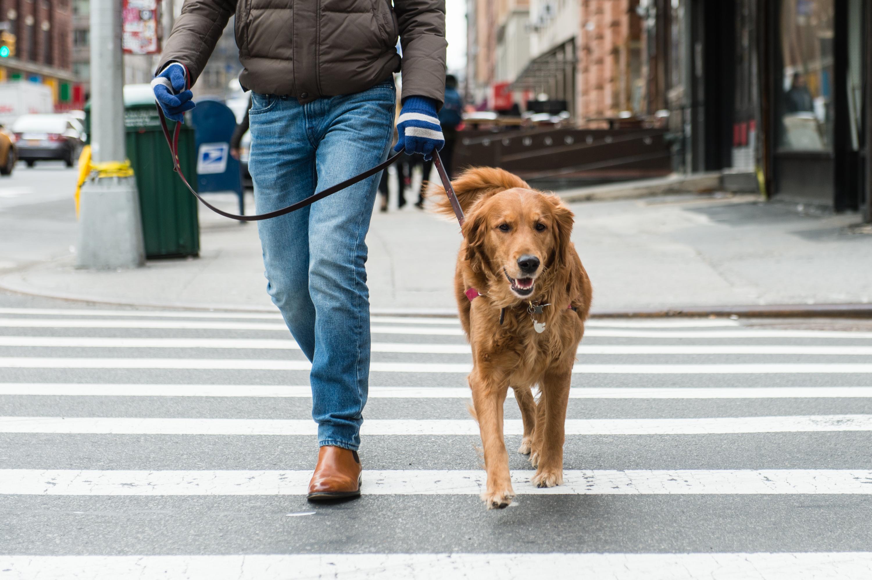 Best Neighborhoods In Nyc For Dogs