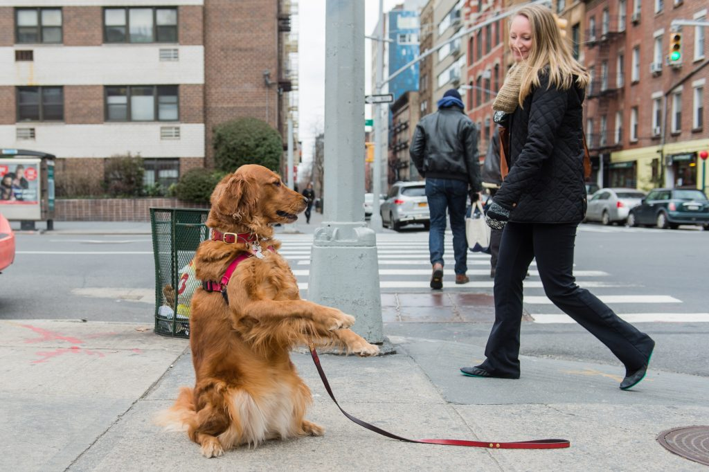 meet the nyc dog who stands on the corner offering hugs the dog