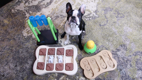 The Best Dog Puzzle Toys, Reviewed by a Dog [Video]