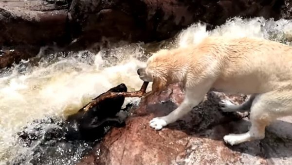 Viral Video Showing Dramatic Dog Rescue Doesn't Tell the Whole Story