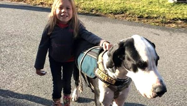 Girl and Her Great Dane Service Dog Make the Whole World Smile