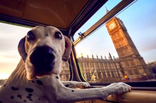 big ben london dog tour