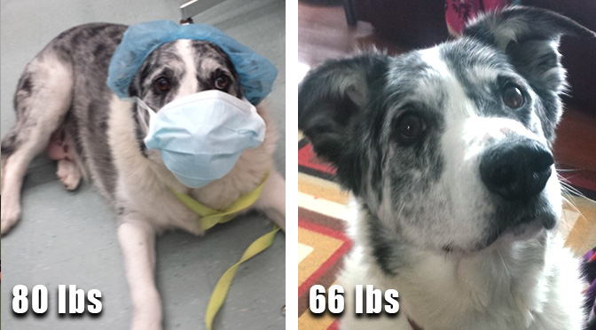 buddy-weight-loss-80-lbs-66-lbs