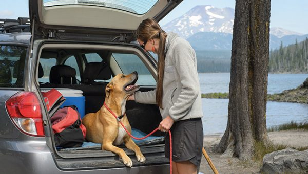 The Complete Guide to the Best Dog Leashes for Every Situation