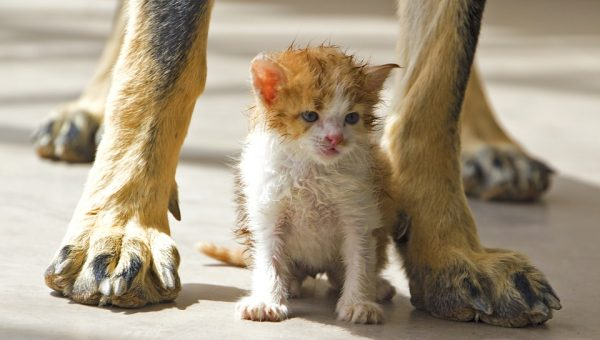 Tips For Introducing Your Dog to a New Kitten (From an Owner Who's Done It)