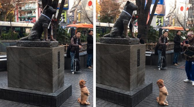 dog-posing-with-hachiko-in-japan