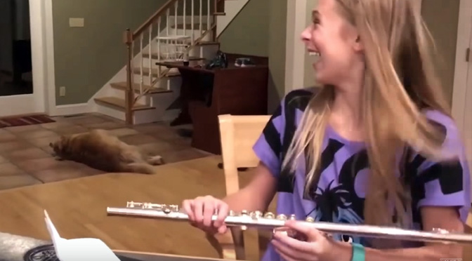 dogs-hilarious-reaction-to-flue-practice