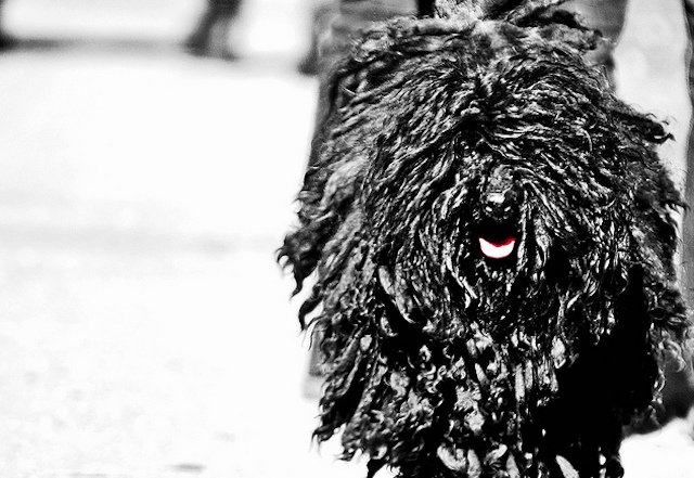 6 Dog Breeds With Dreadlocks And How
