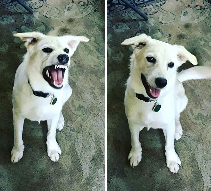 good-boy-3