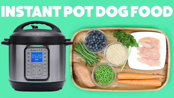 Easy DIY Dog Food You Can Make in Your Instant Pot