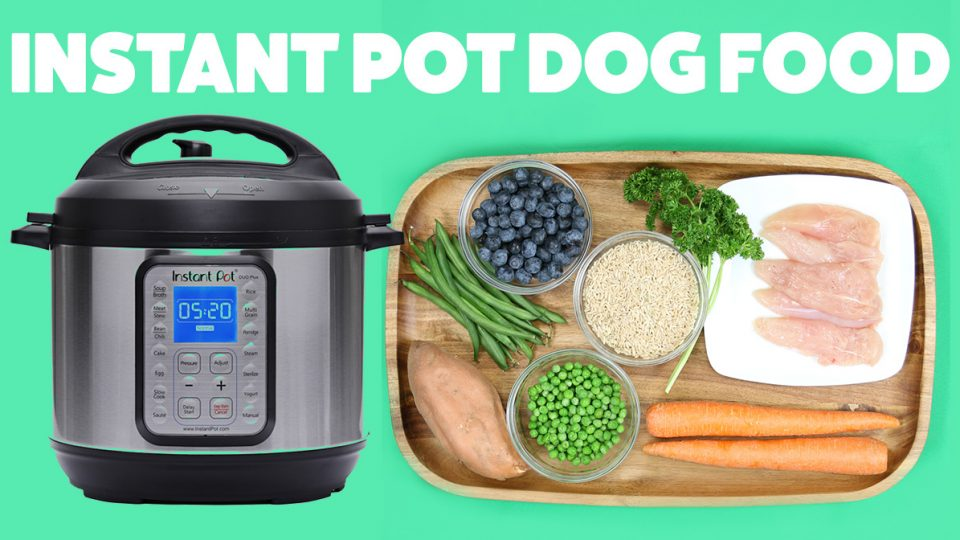 instant pot dog food