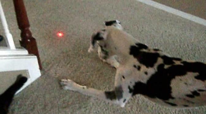 laser-pointer-dog