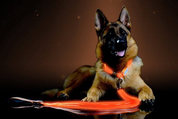 led light up leash